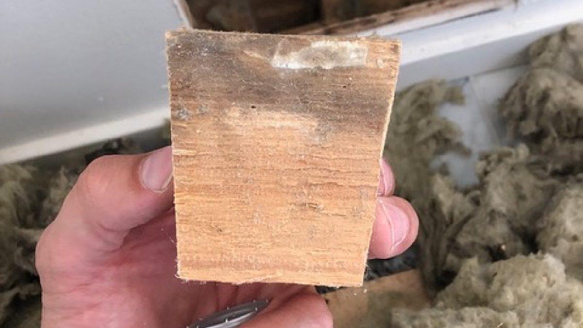 Mikrobivaurioitunut alasidepuu